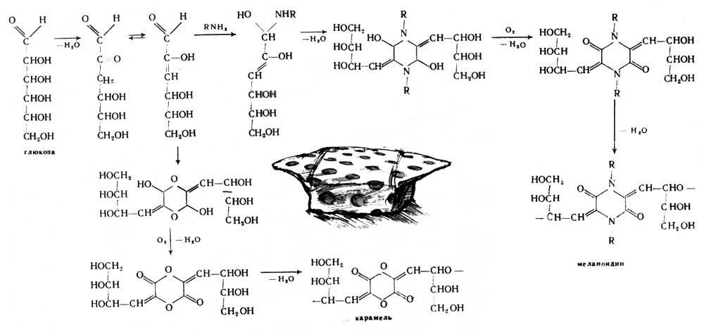 Схема образования меланоидинов